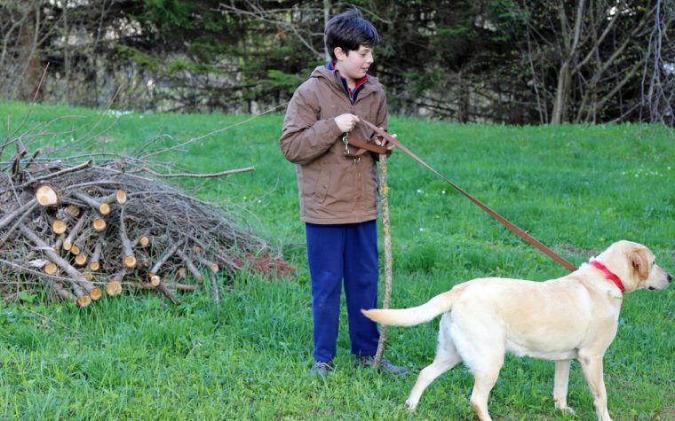Family Dog May Help CP Kids Improve Motor Skills and Quality of Life, Case Study Finds